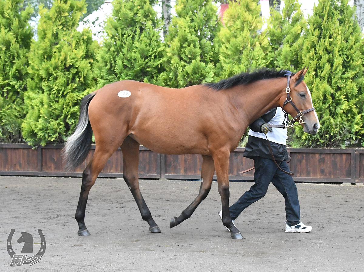 リュクスレジェンドの馬体写真
