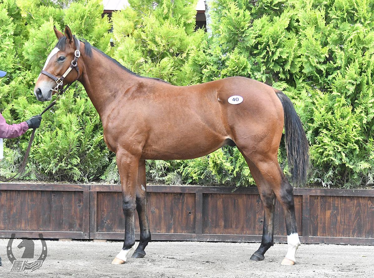タイセイメガロスの馬体写真