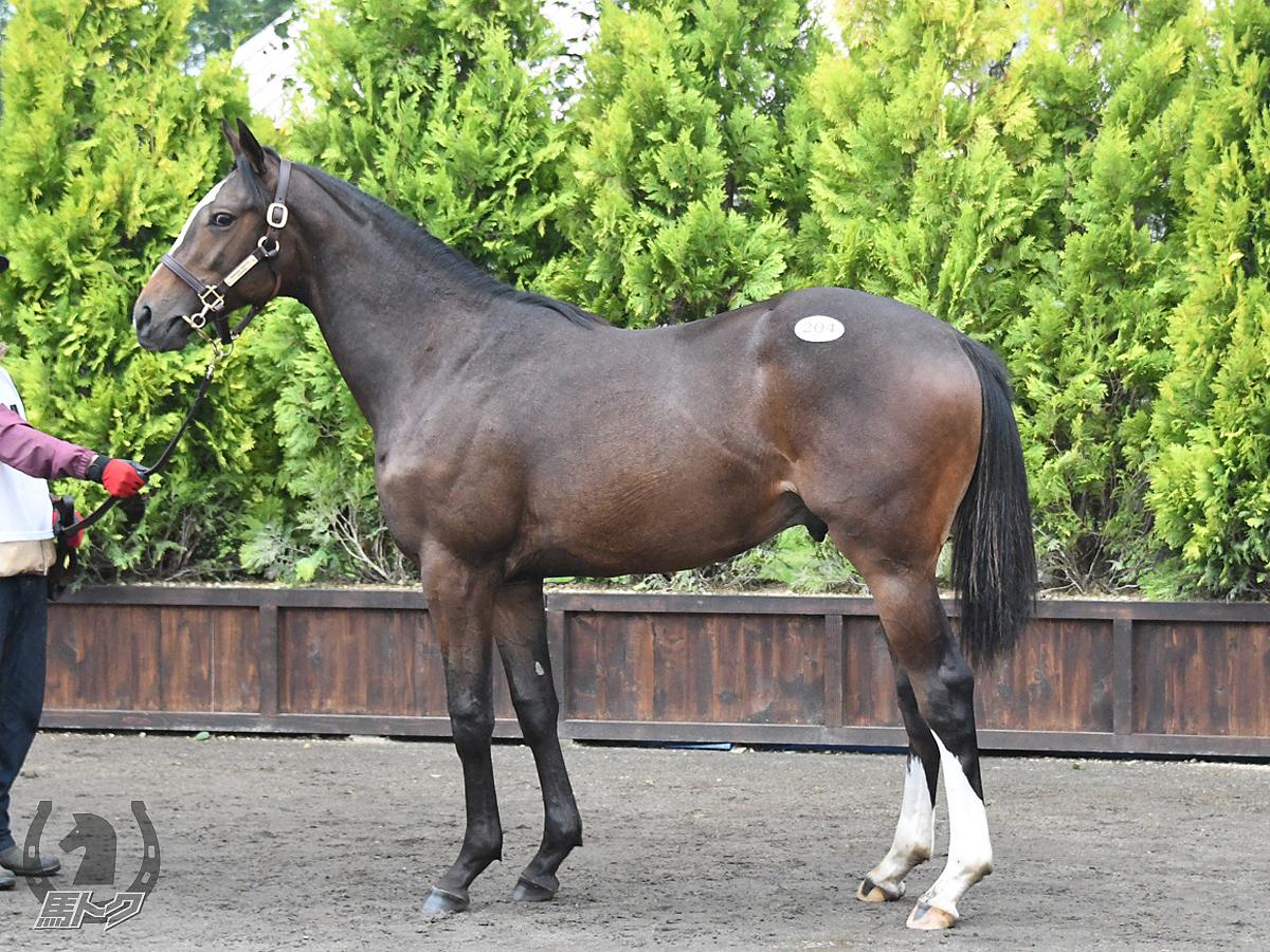 グレイトムーンの馬体写真
