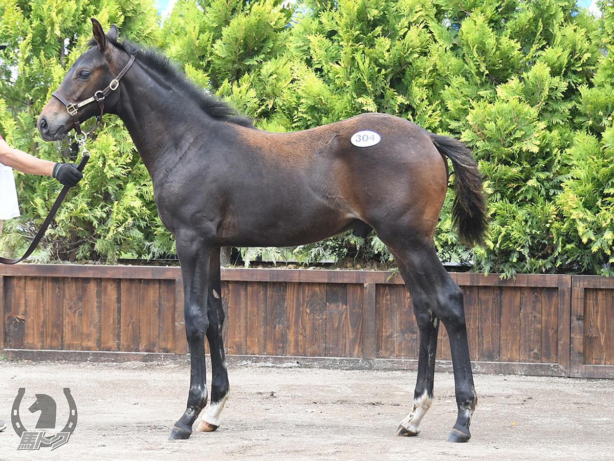 オメガデラックスの馬体写真