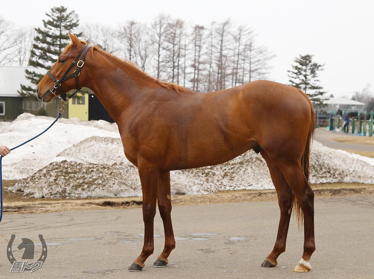 オプティマスの馬体写真