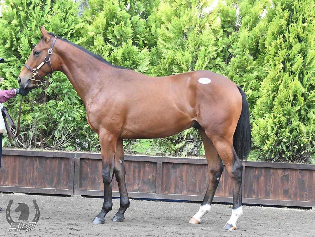 ロワルゼルの馬体写真