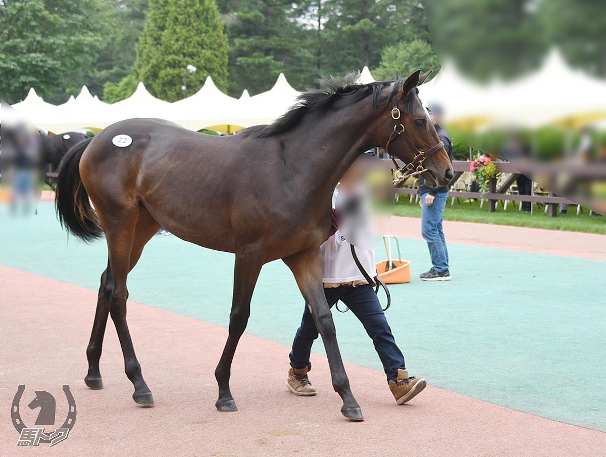 マルカエイペックスの馬体写真