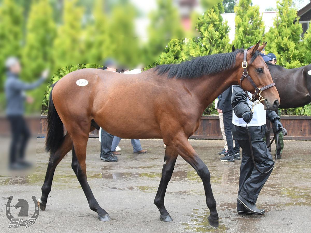 トラストバディの馬体写真