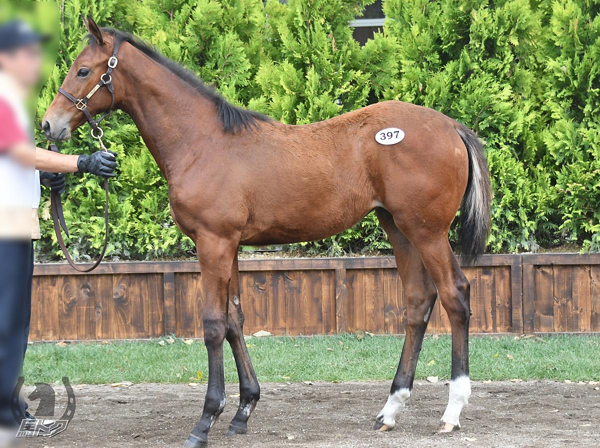 カトゥーアの馬体写真