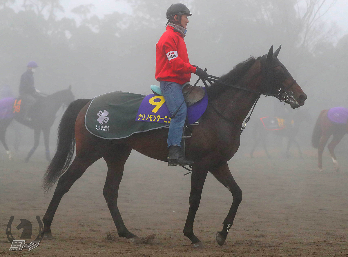ナリノモンターニュの馬体写真