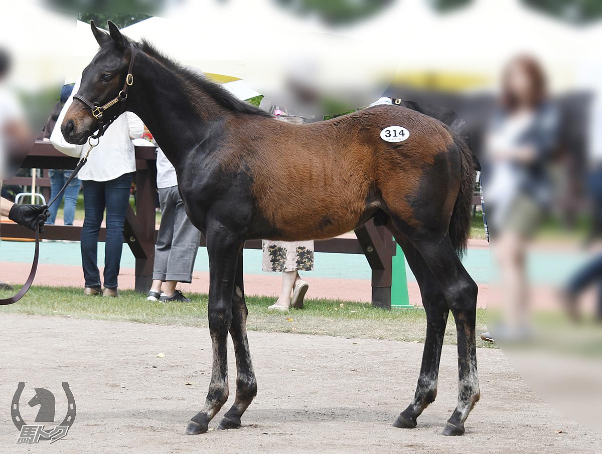 トリトンの馬体写真