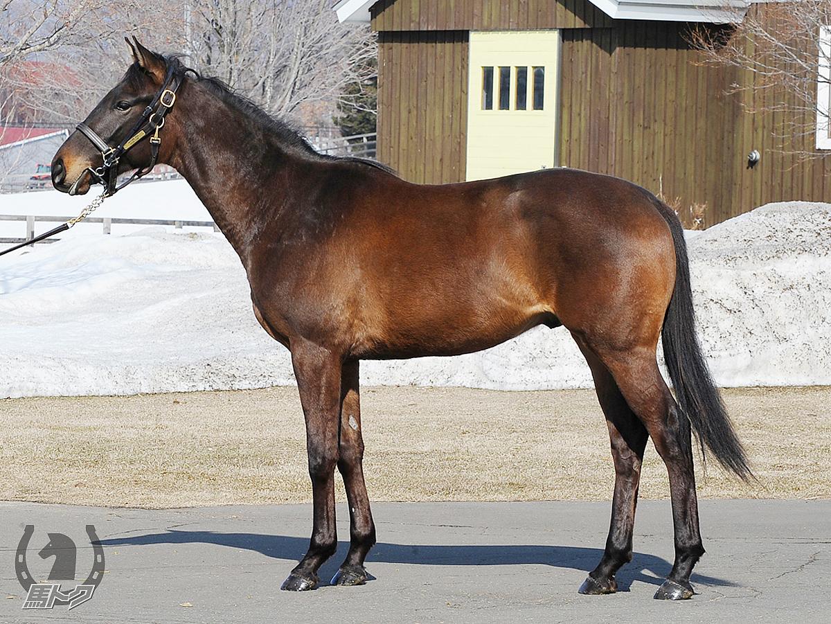 ヴィクトリーレーンの馬体写真