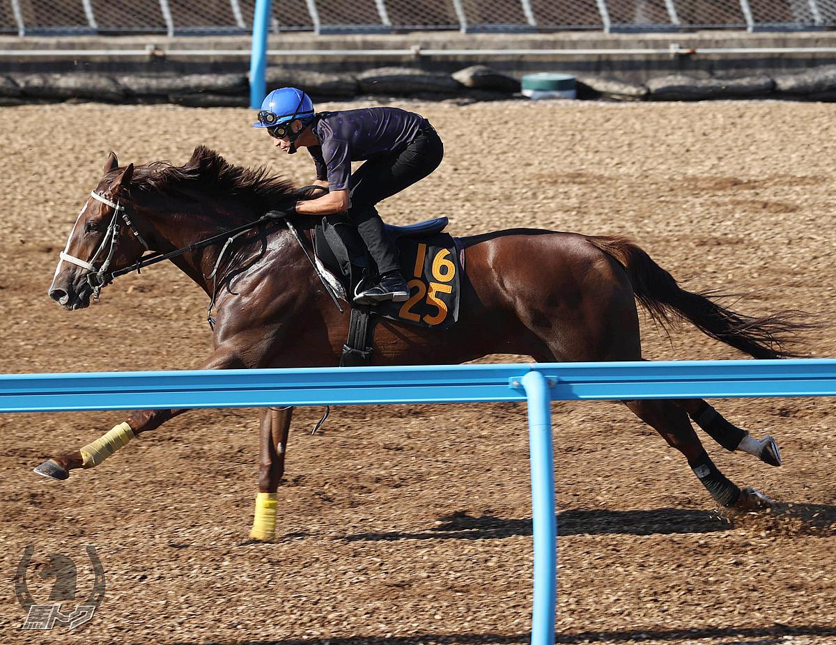 デジマノハナの馬体写真