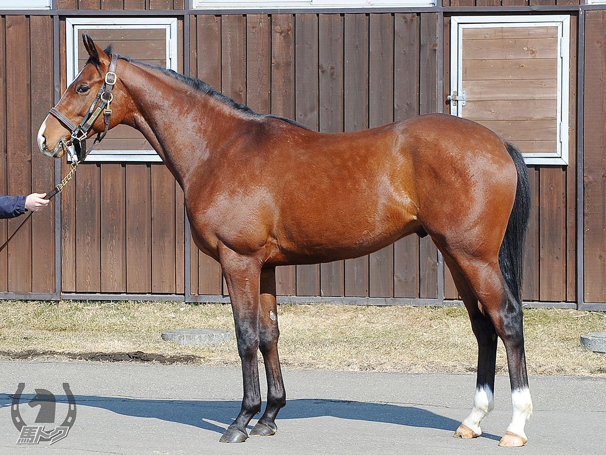 ファルコニアの馬体写真
