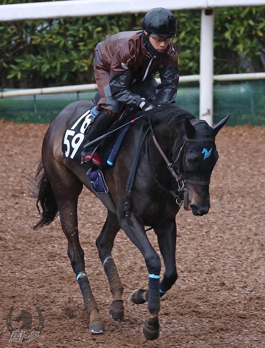 エヴァジョーネの馬体写真