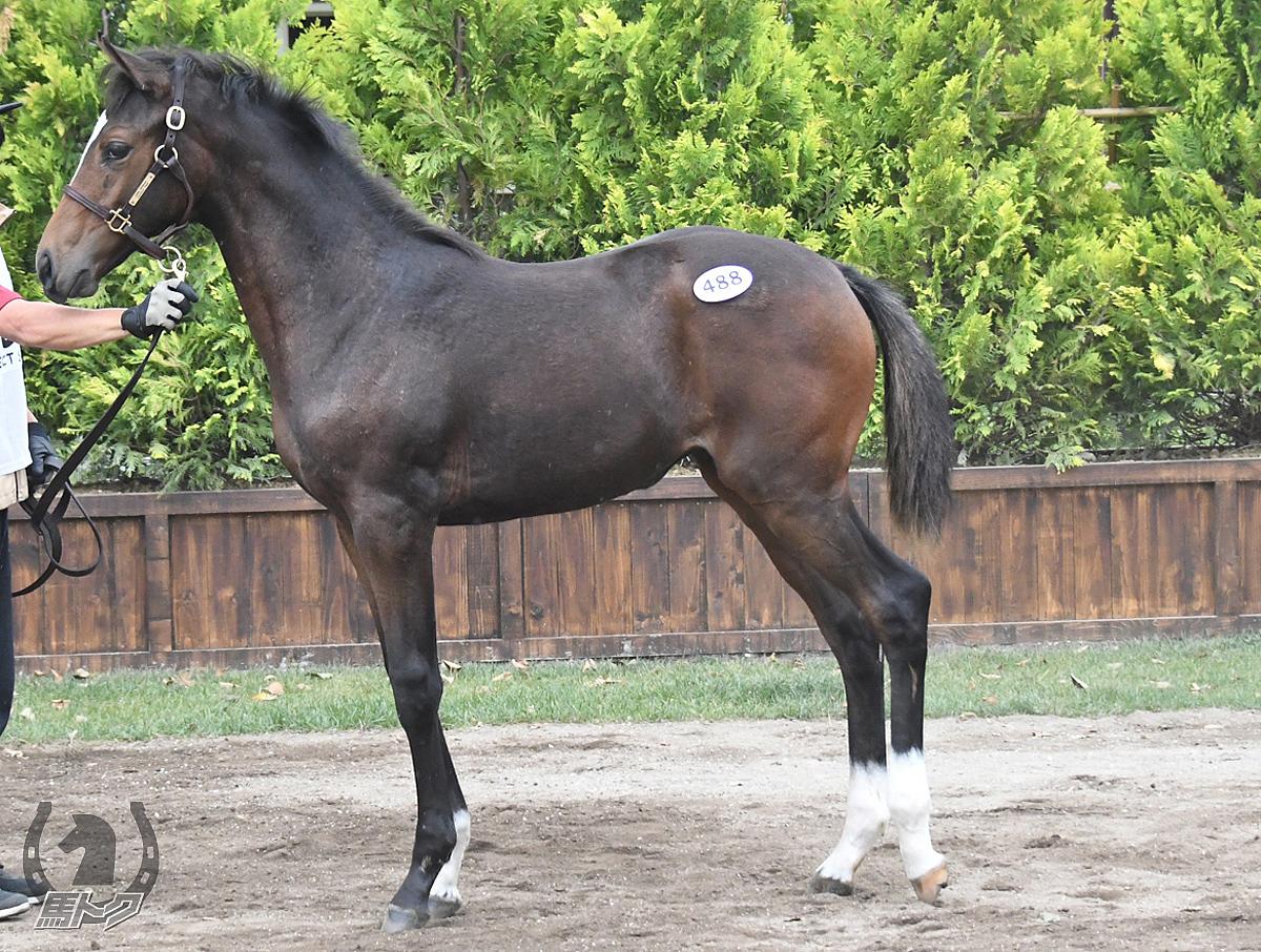 マコトジェムチュクの馬体写真