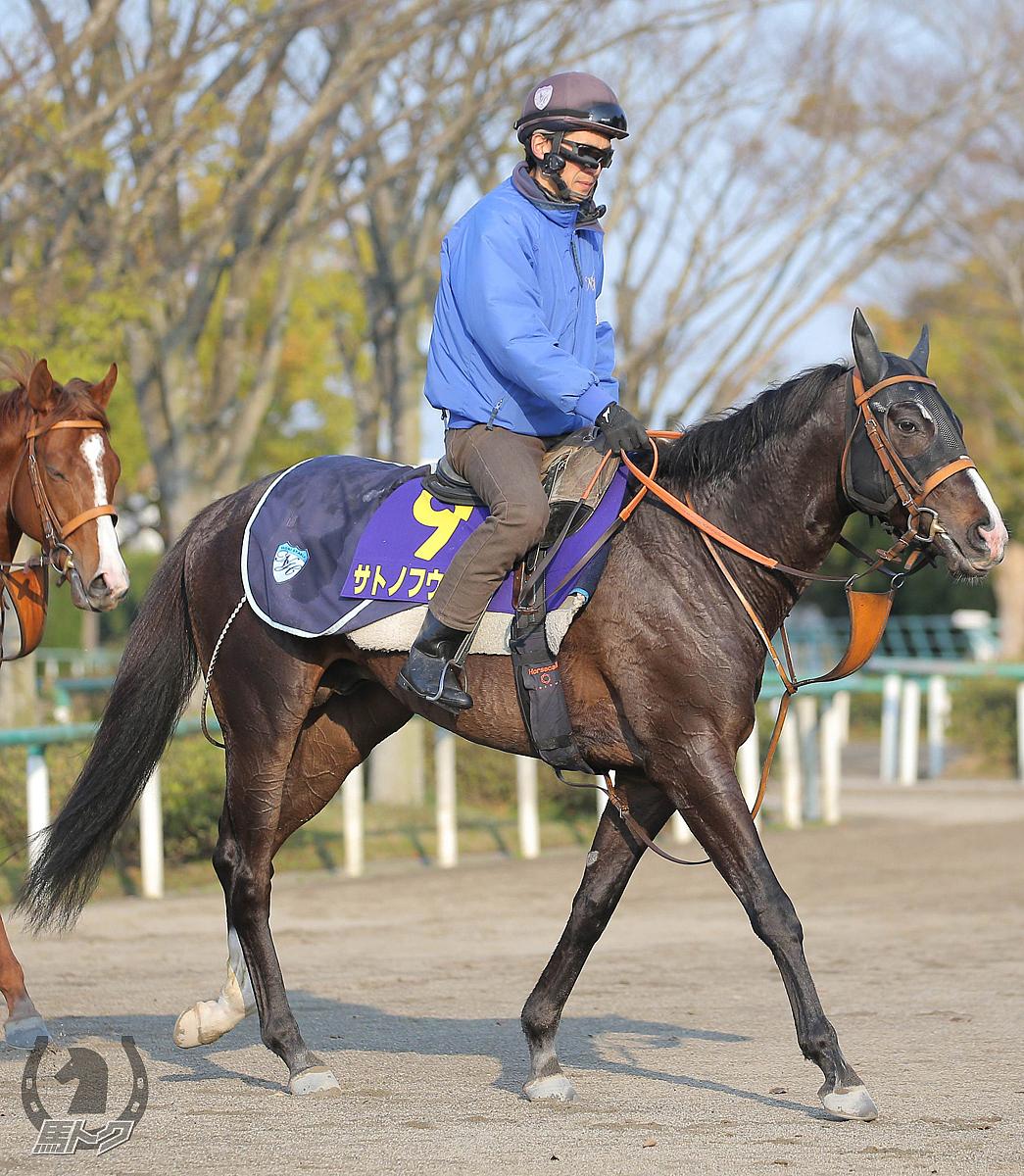 サトノフウジンの馬体写真