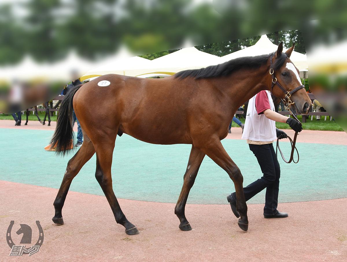 エリモグリッターの馬体写真