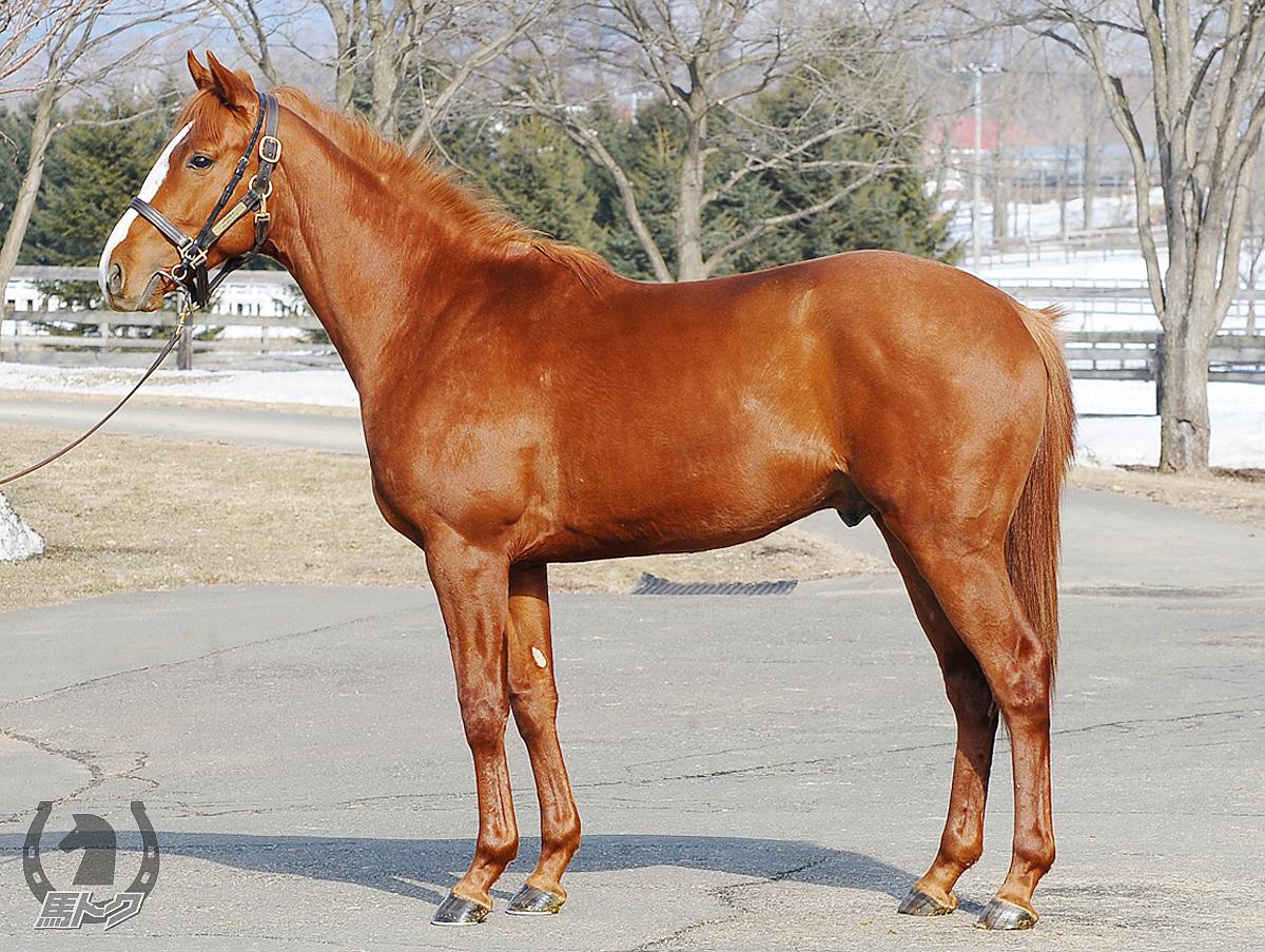 ゴールデンアークの馬体写真