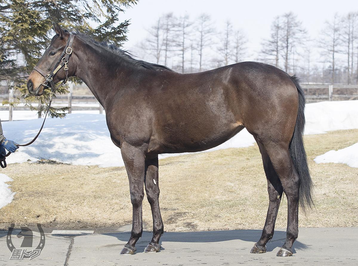 レッドカルムの馬体写真