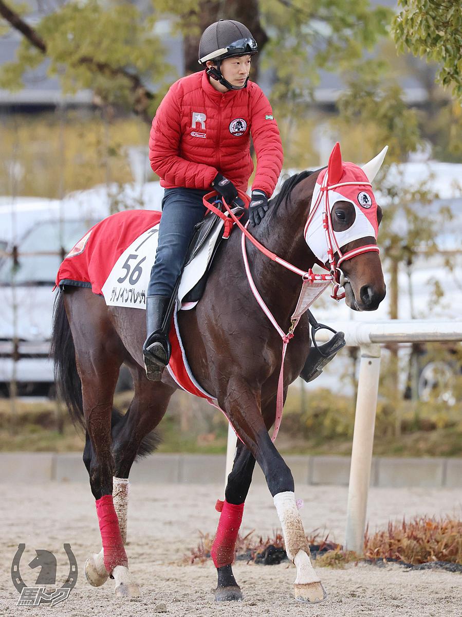 サトノインプレッサの馬体写真