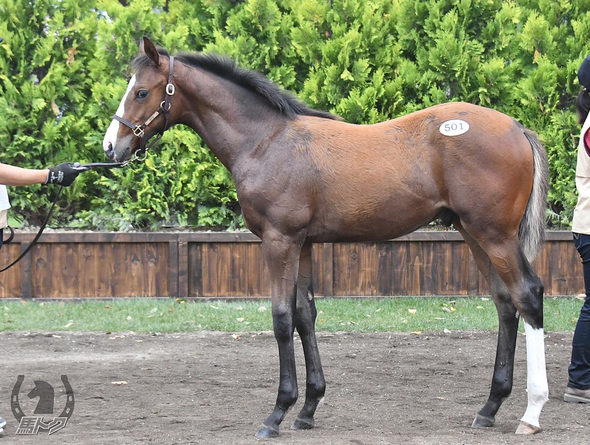トーセンリーブルの馬体写真