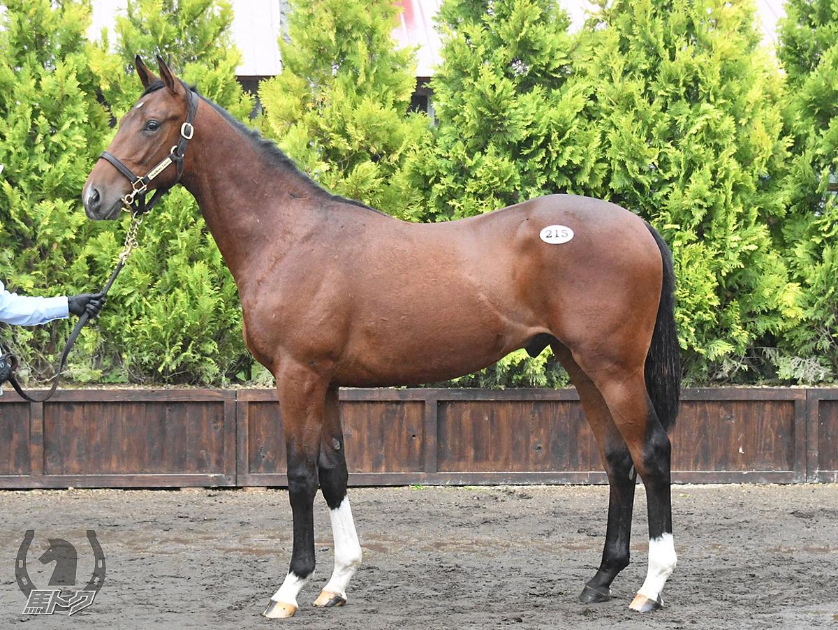 ドロスの馬体写真