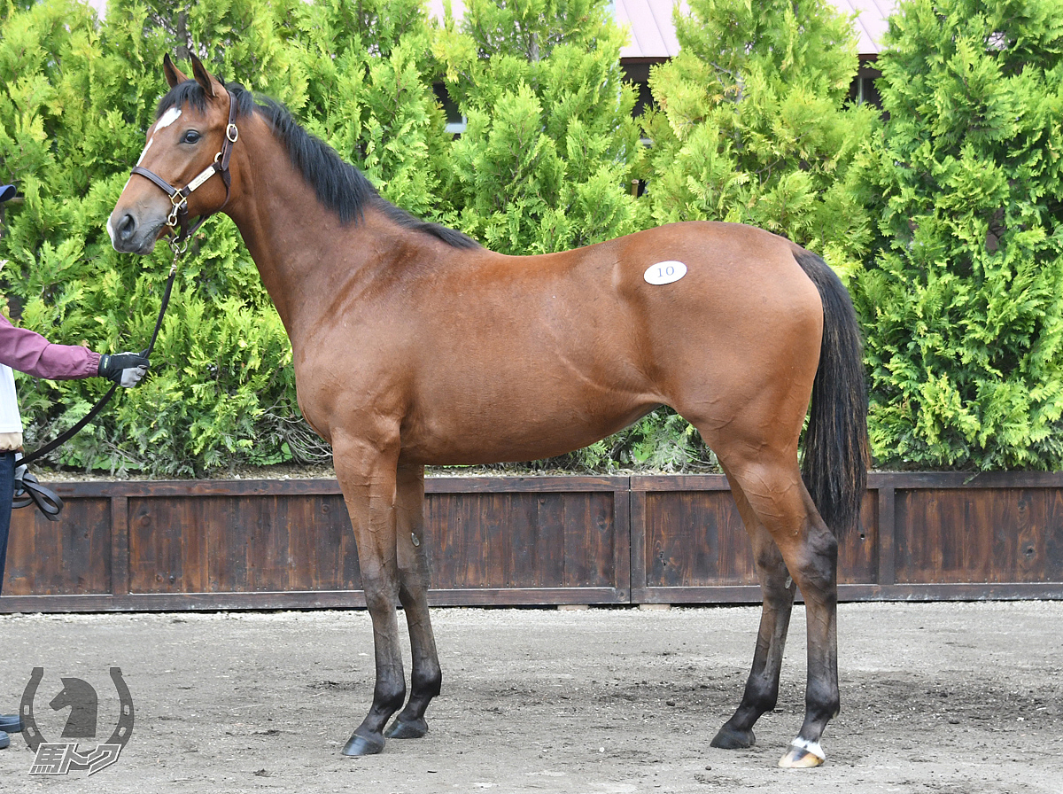デルマトルマリンの馬体写真