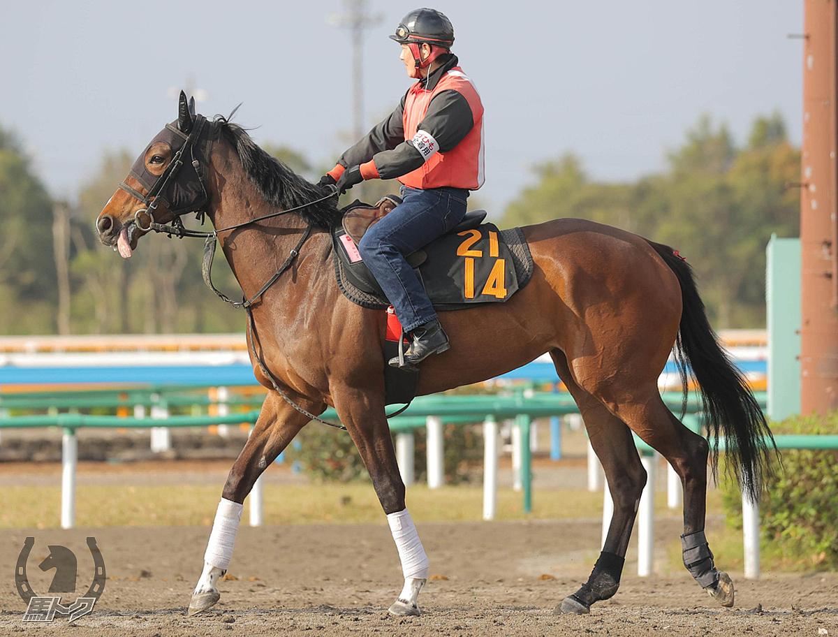 リヴァージュの馬体写真