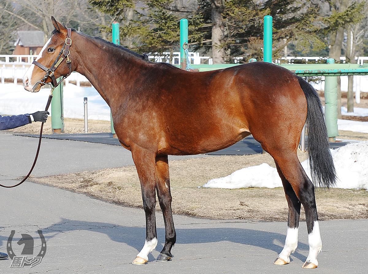スパングルドスターの馬体写真