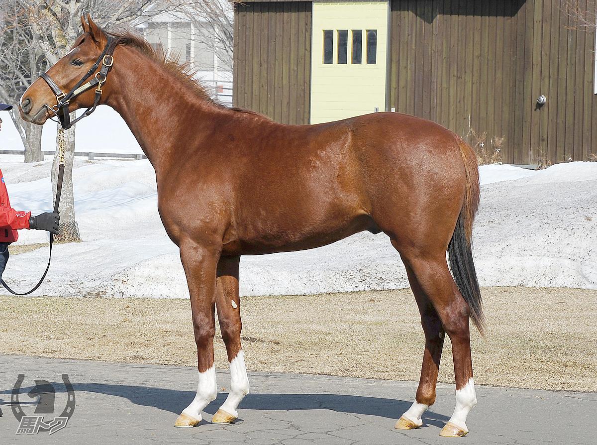 クンタキンテの馬体写真