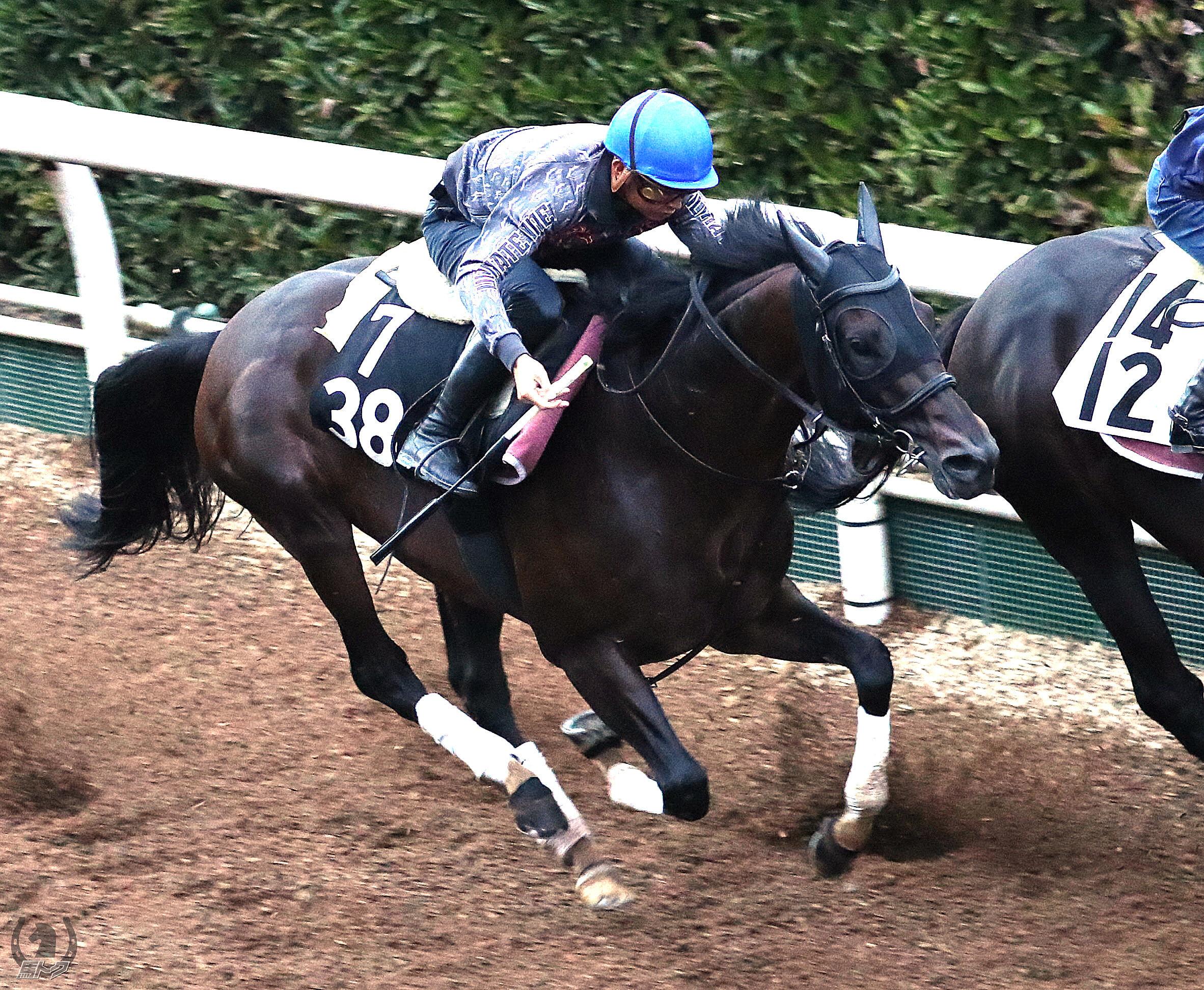ディープキングの馬体写真