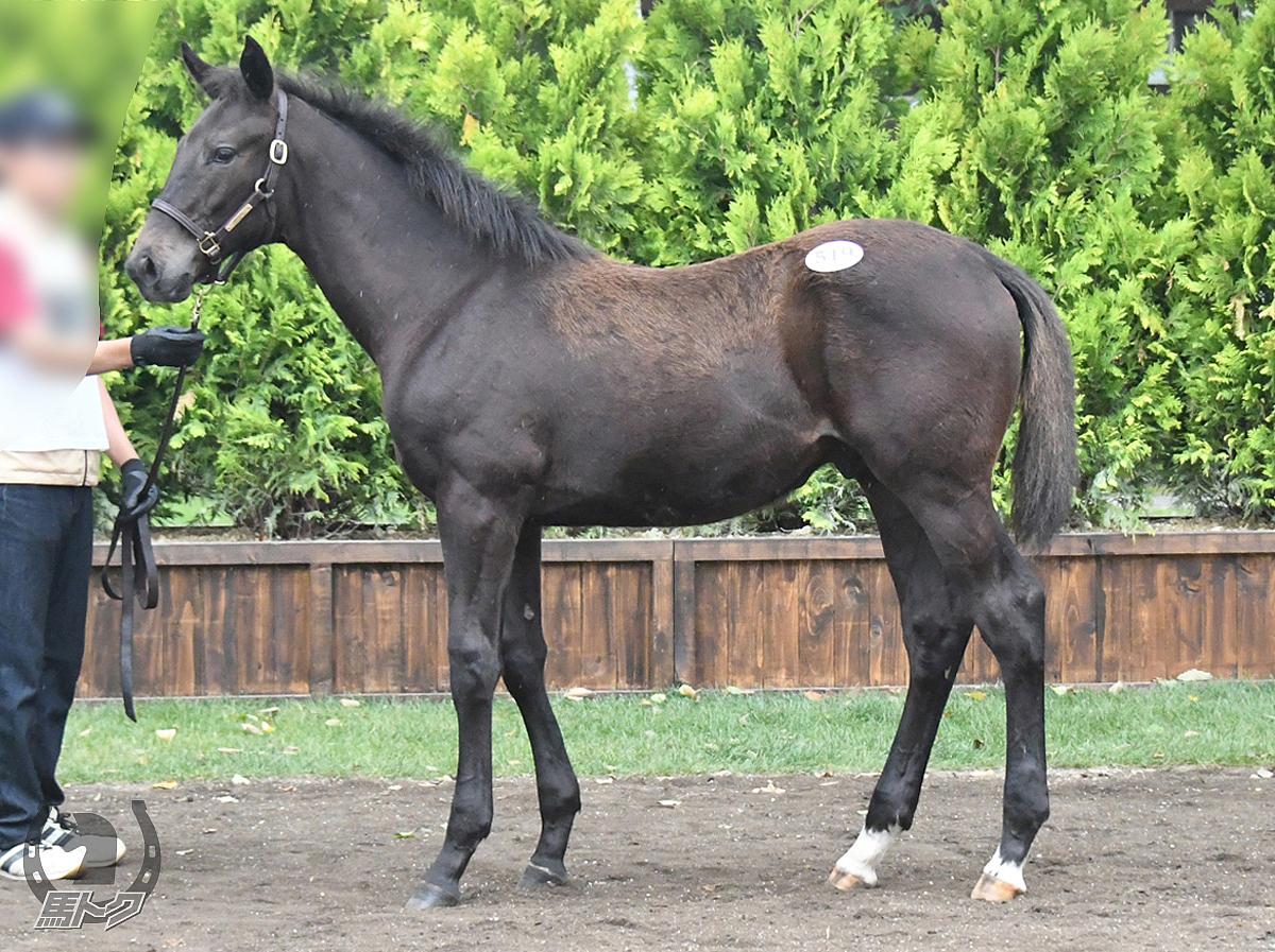 ヴェルシャールの馬体写真