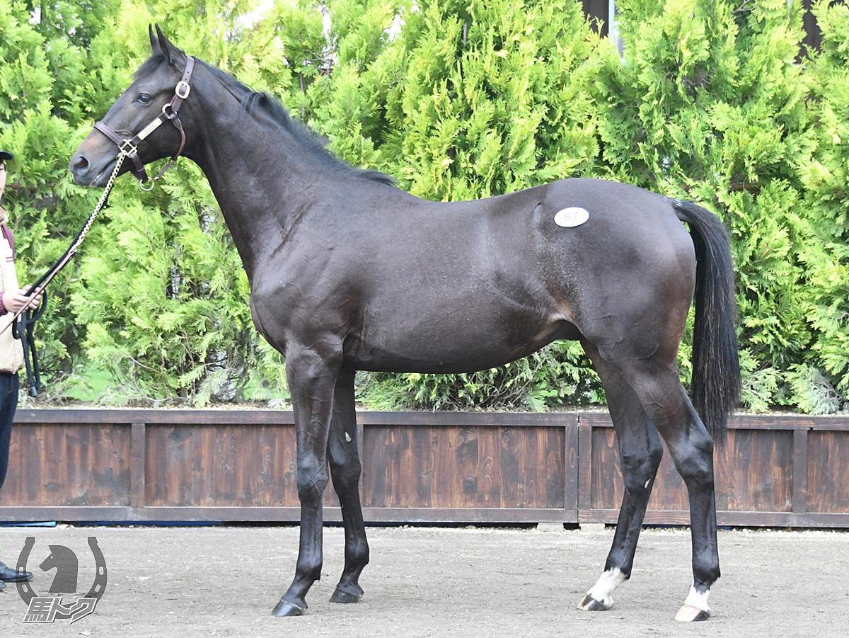 ハットルヴァンの馬体写真