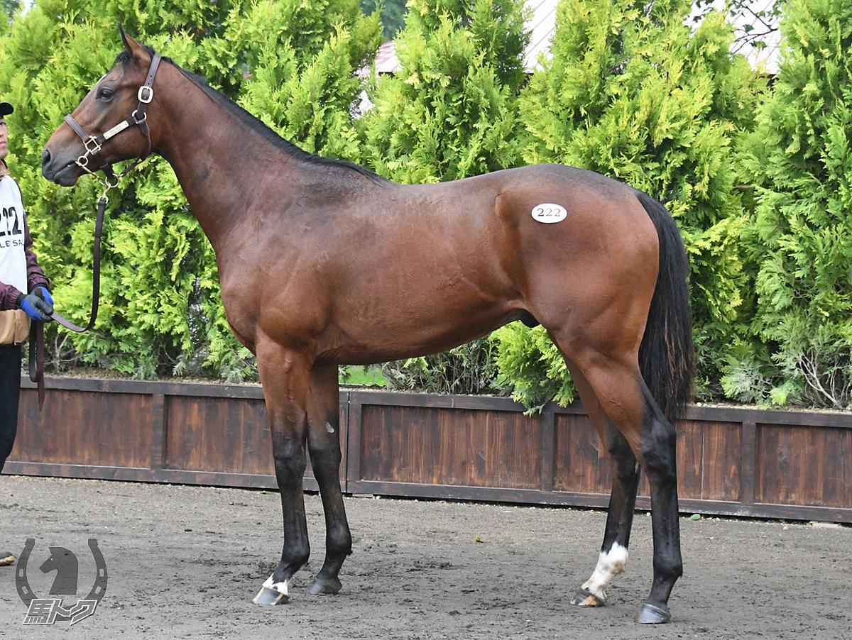 オーマイオーマイの馬体写真