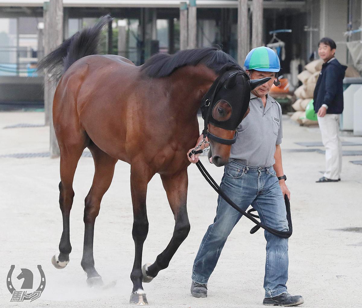 リメンバーメモリーの馬体写真