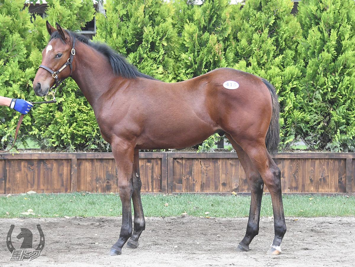 スワーヴカエサルの馬体写真