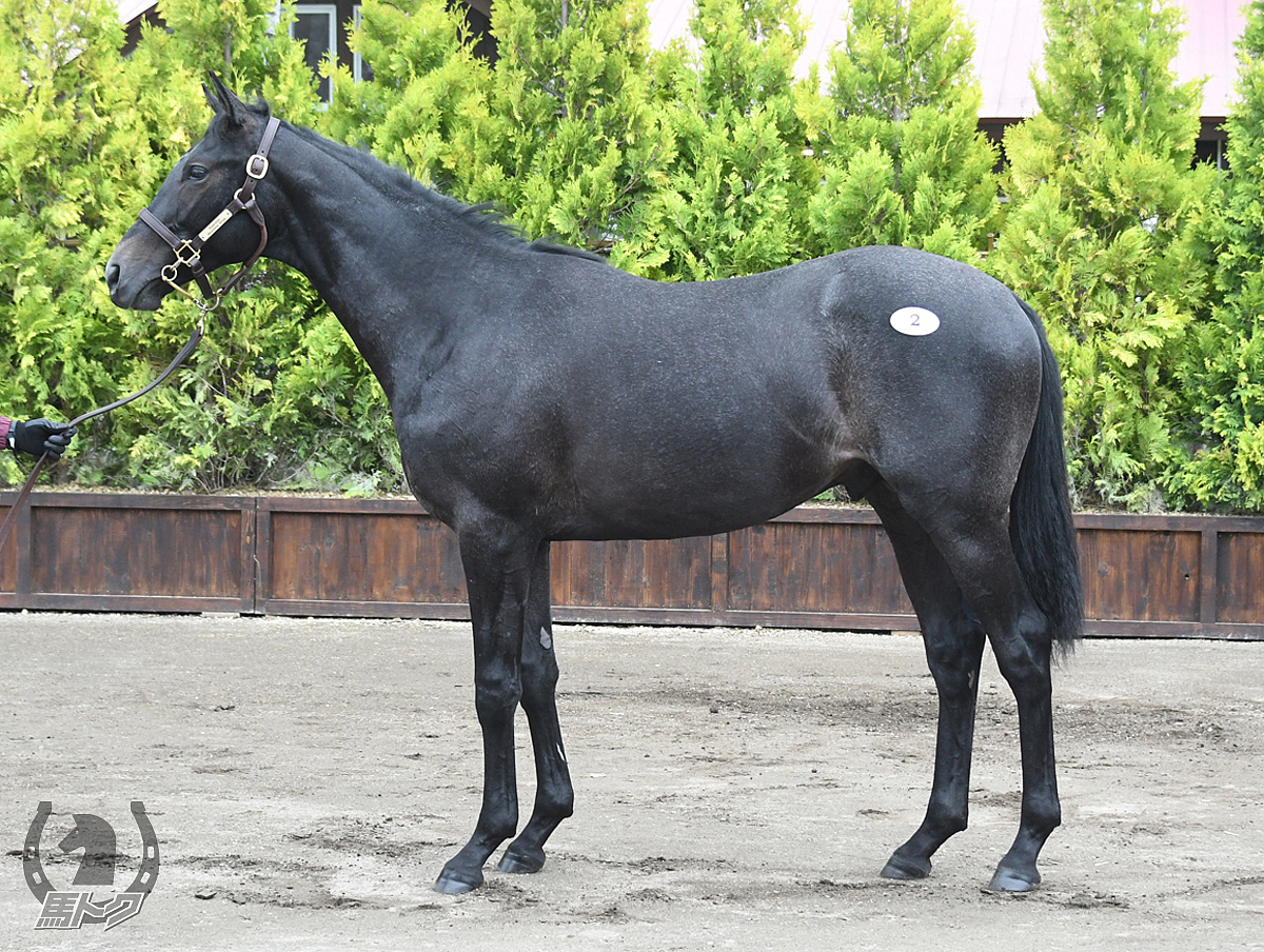 メイケイカガヤキの馬体写真