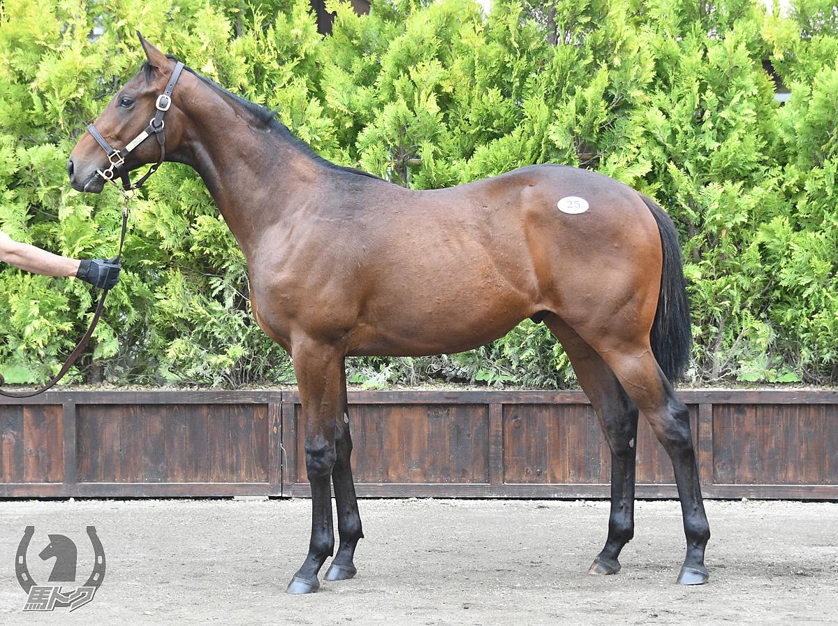 アルゾフラの馬体写真