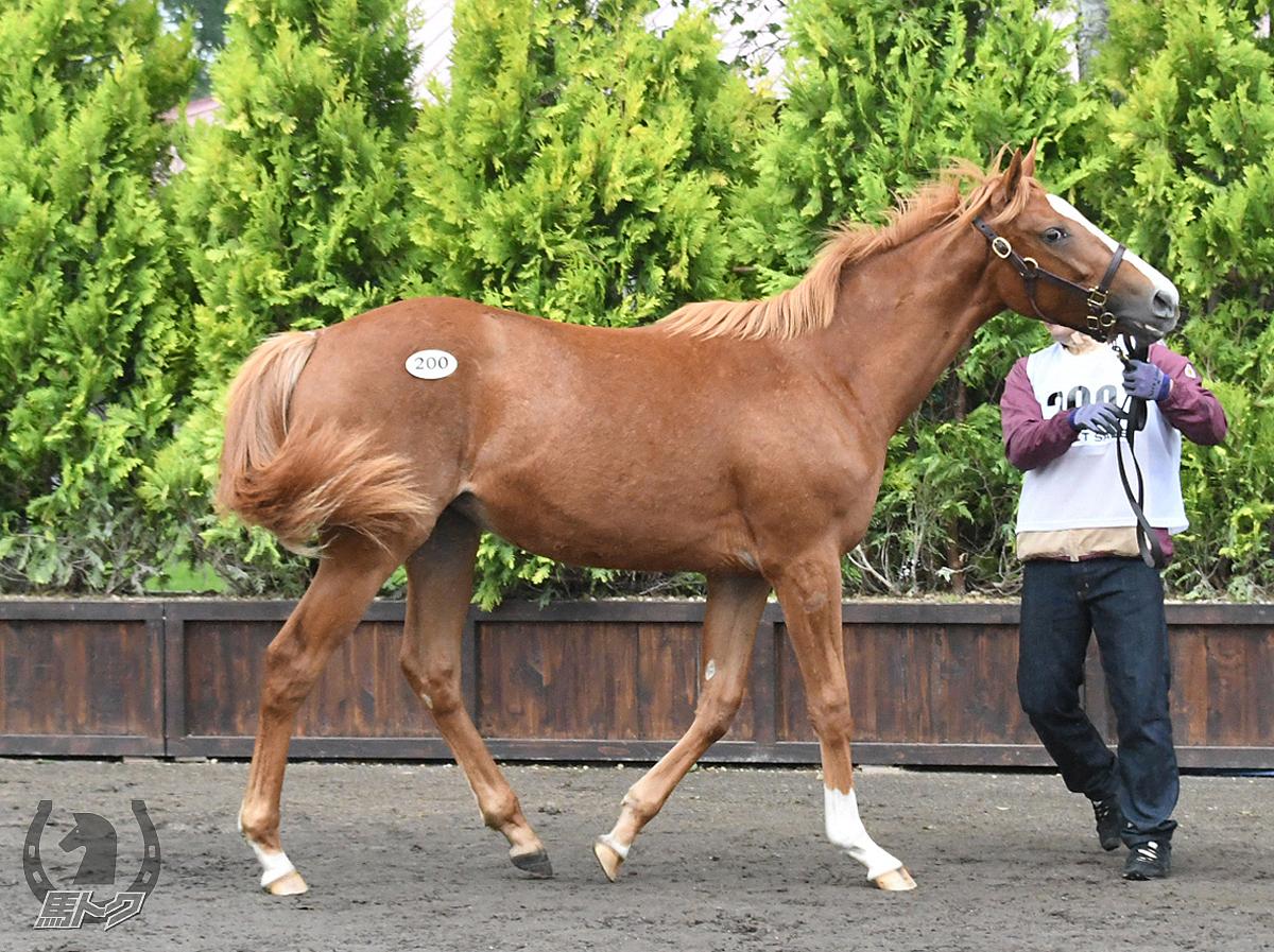 ナンヨーショウエイの馬体写真