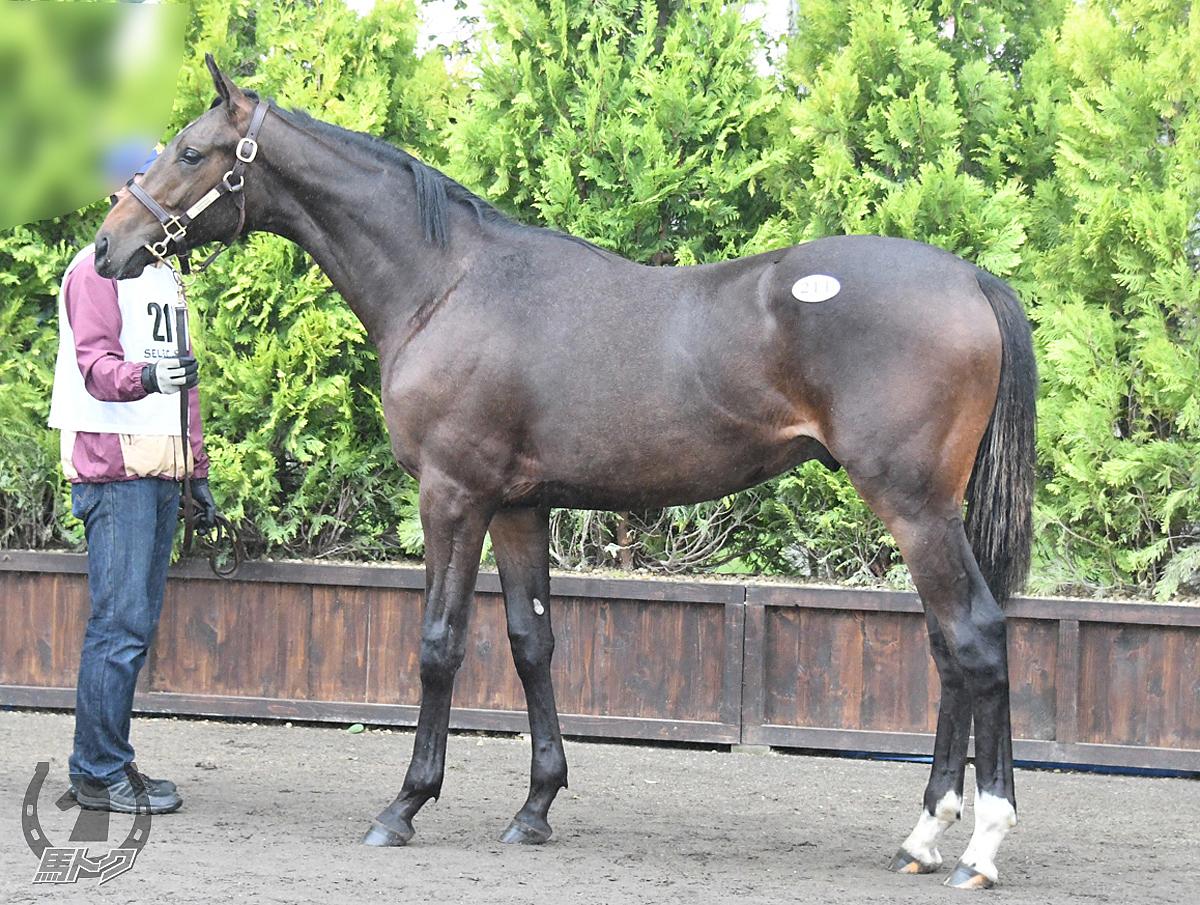 ナリタアレスの馬体写真