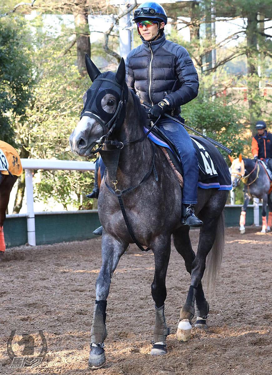 サトノゴールドの馬体写真