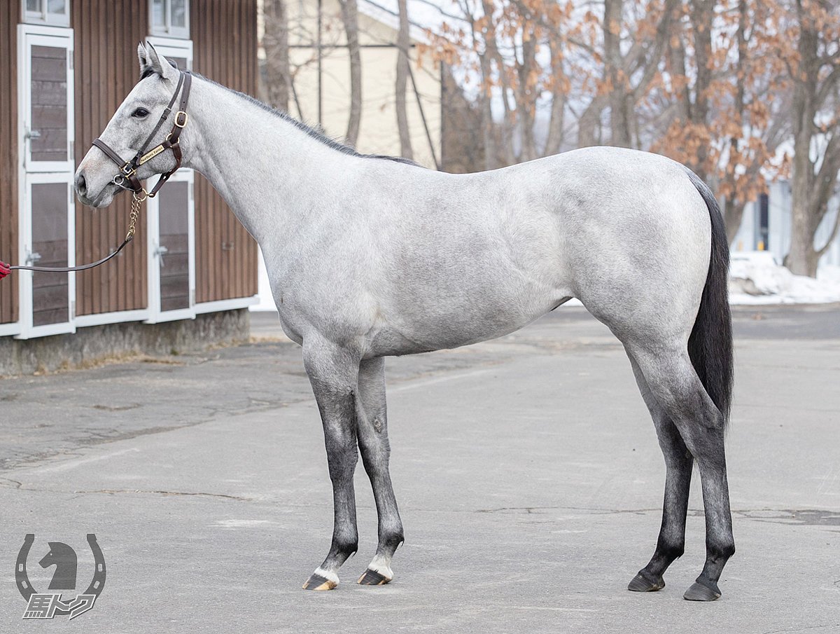 キャンディフロスの馬体写真