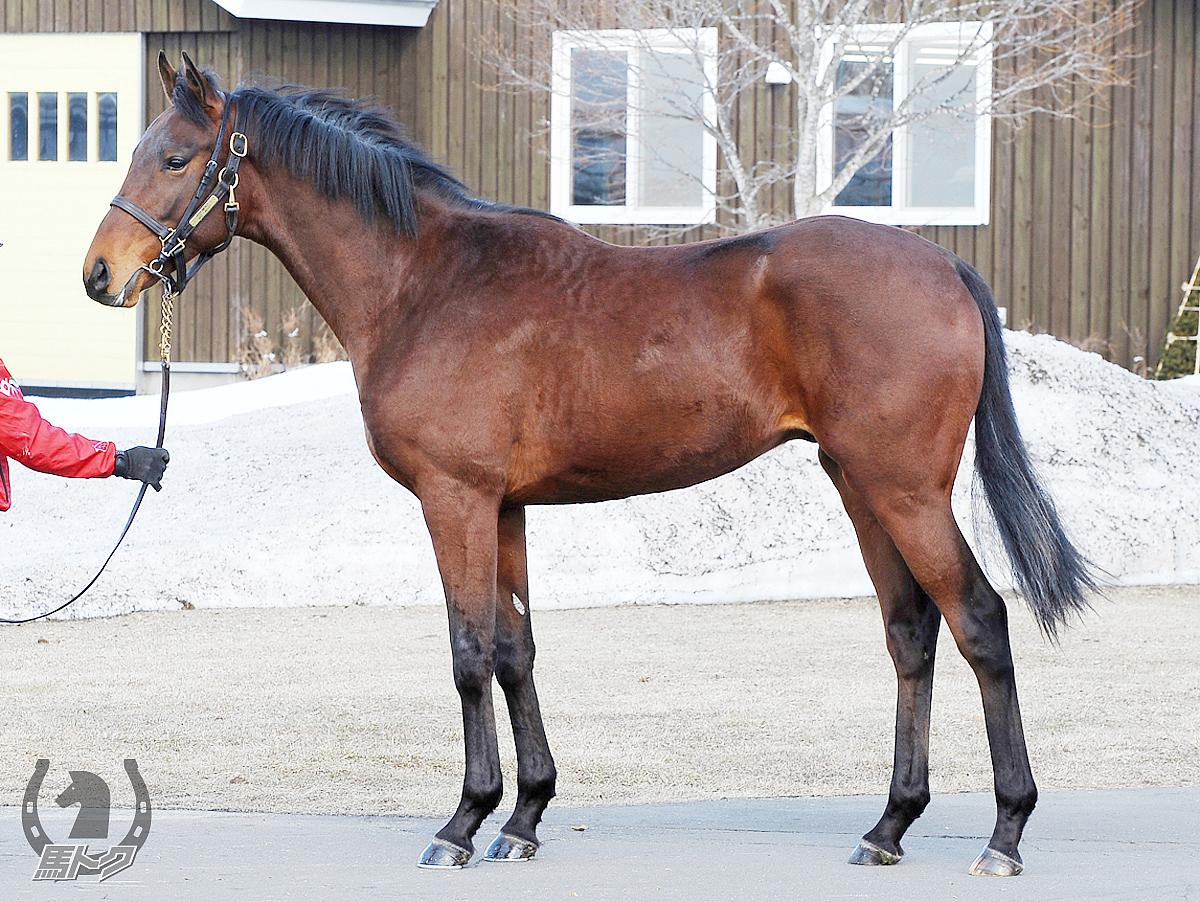 サンデーミラージュの馬体写真