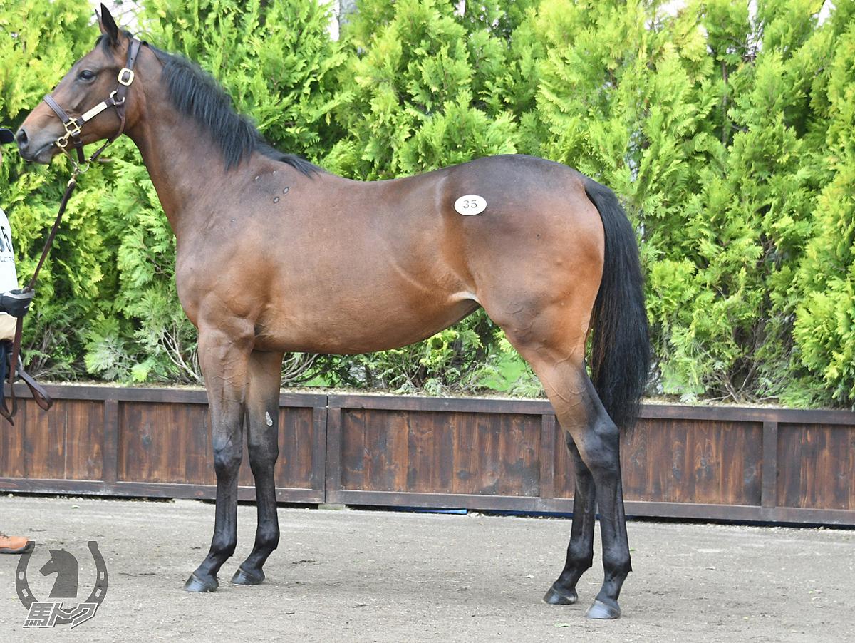 メデタシメデタシの馬体写真