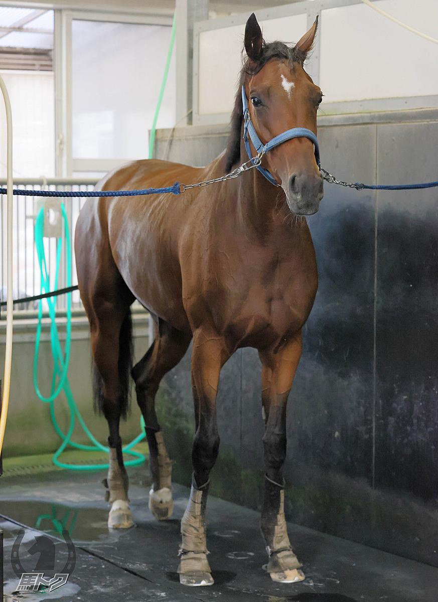 オーマイダーリンの馬体写真