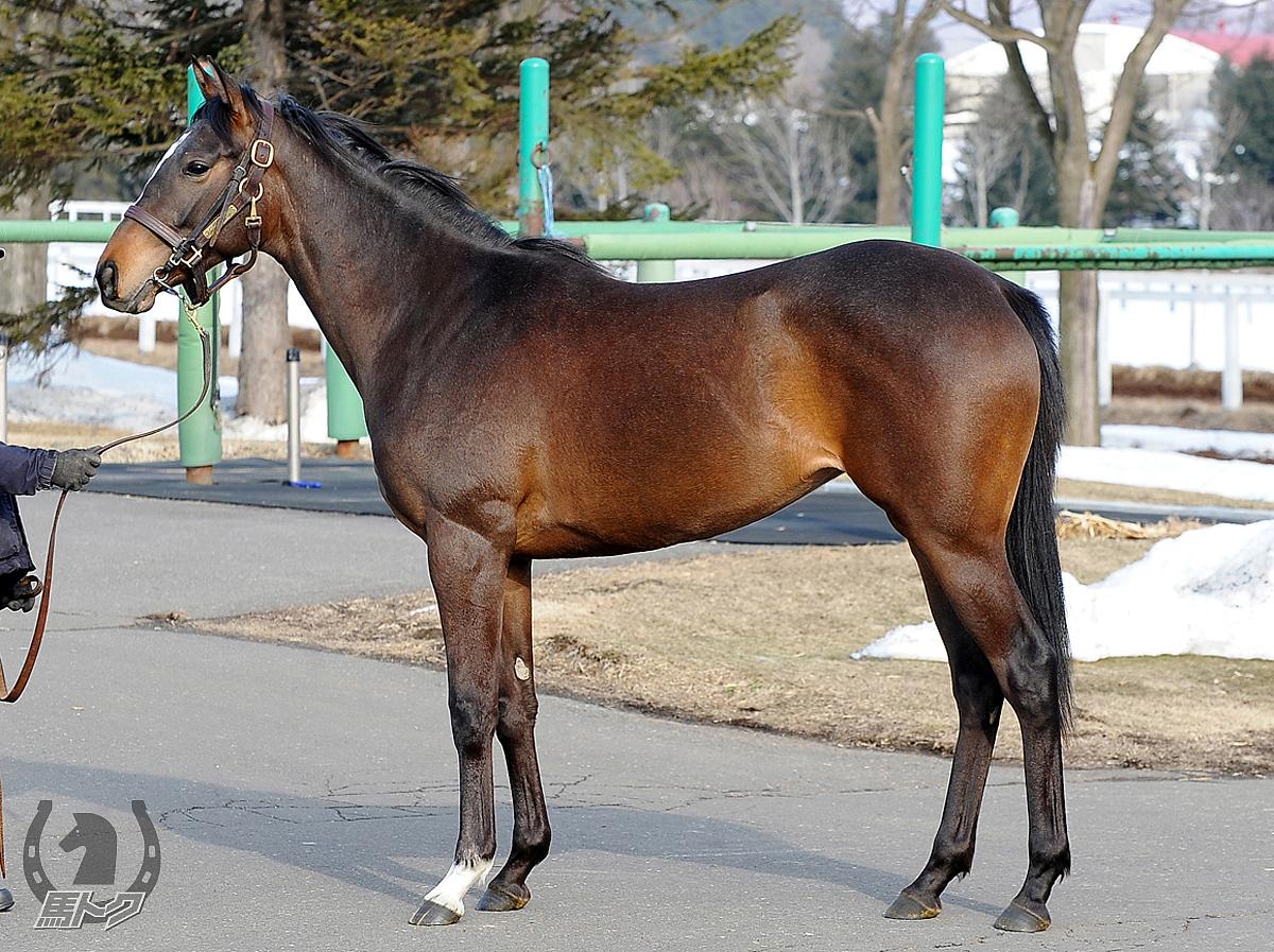 ルヴェルソーの馬体写真