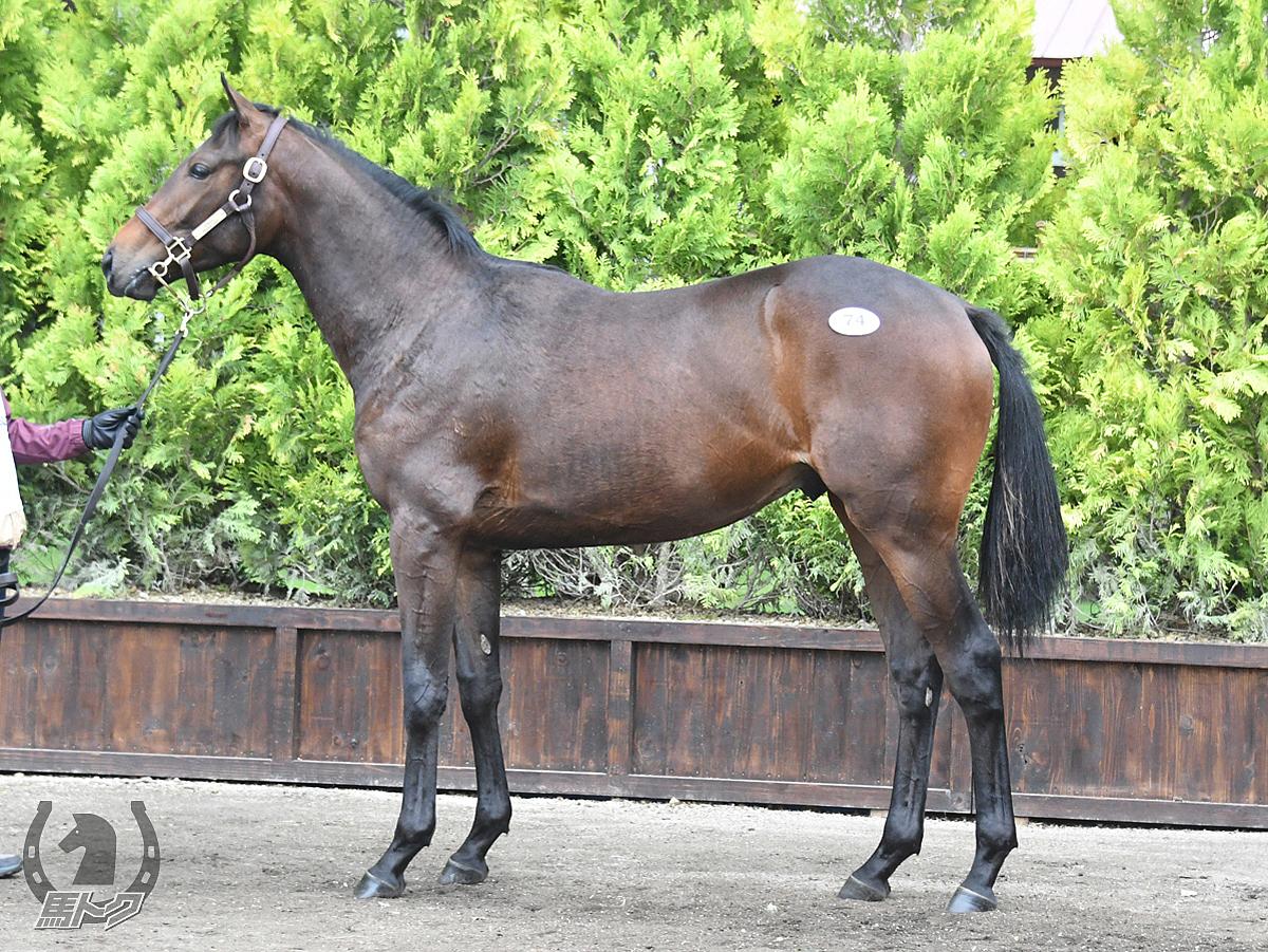 ソステヌートペダルの馬体写真
