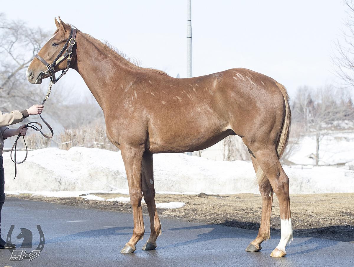 レッドヴァレリーの馬体写真