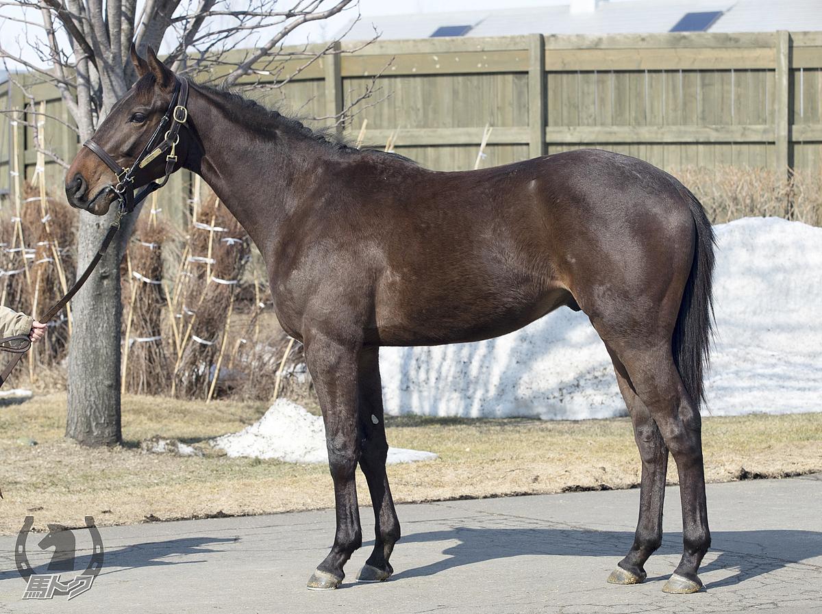 レッドデュランの馬体写真