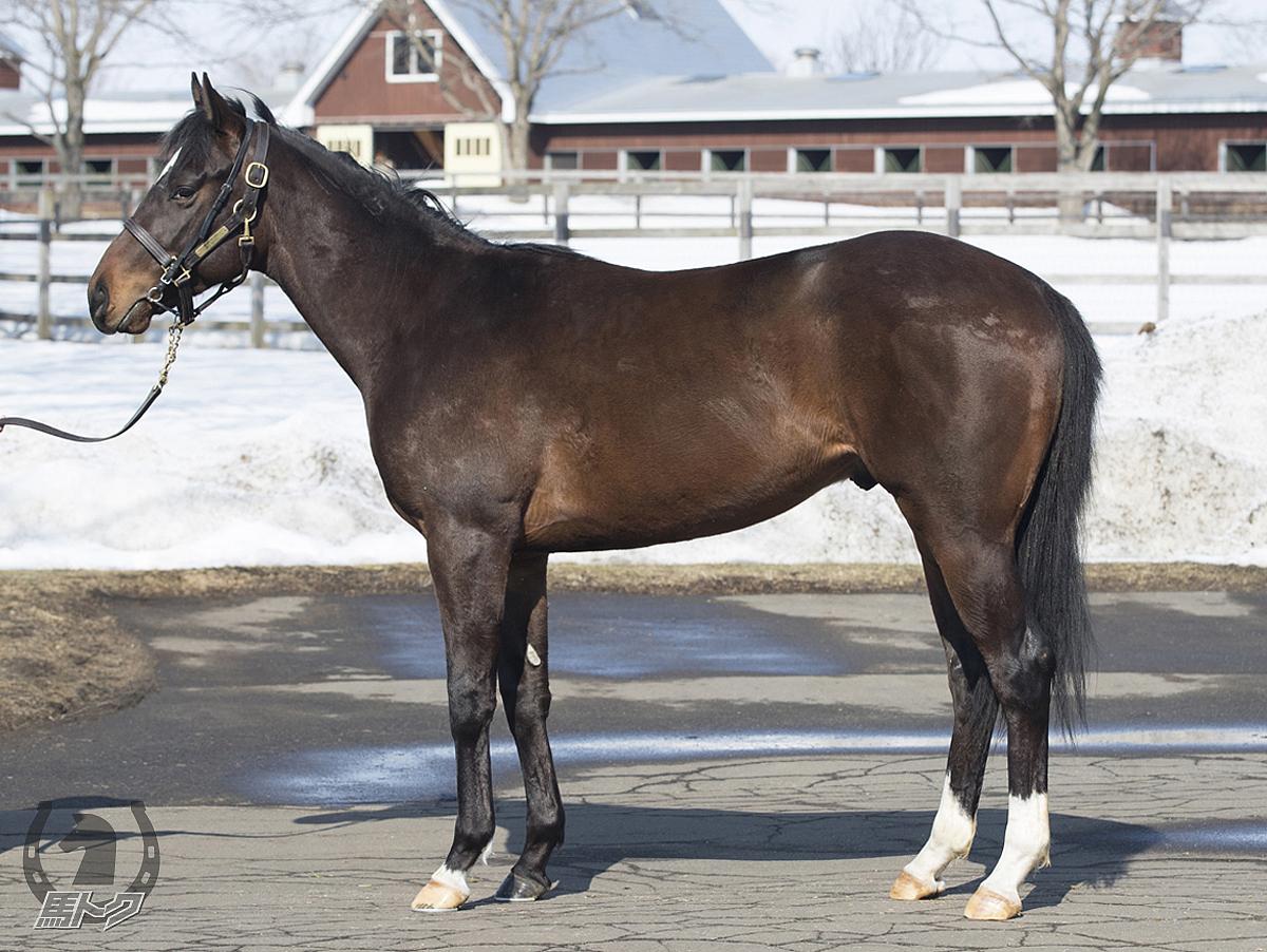 レッドベロムの馬体写真