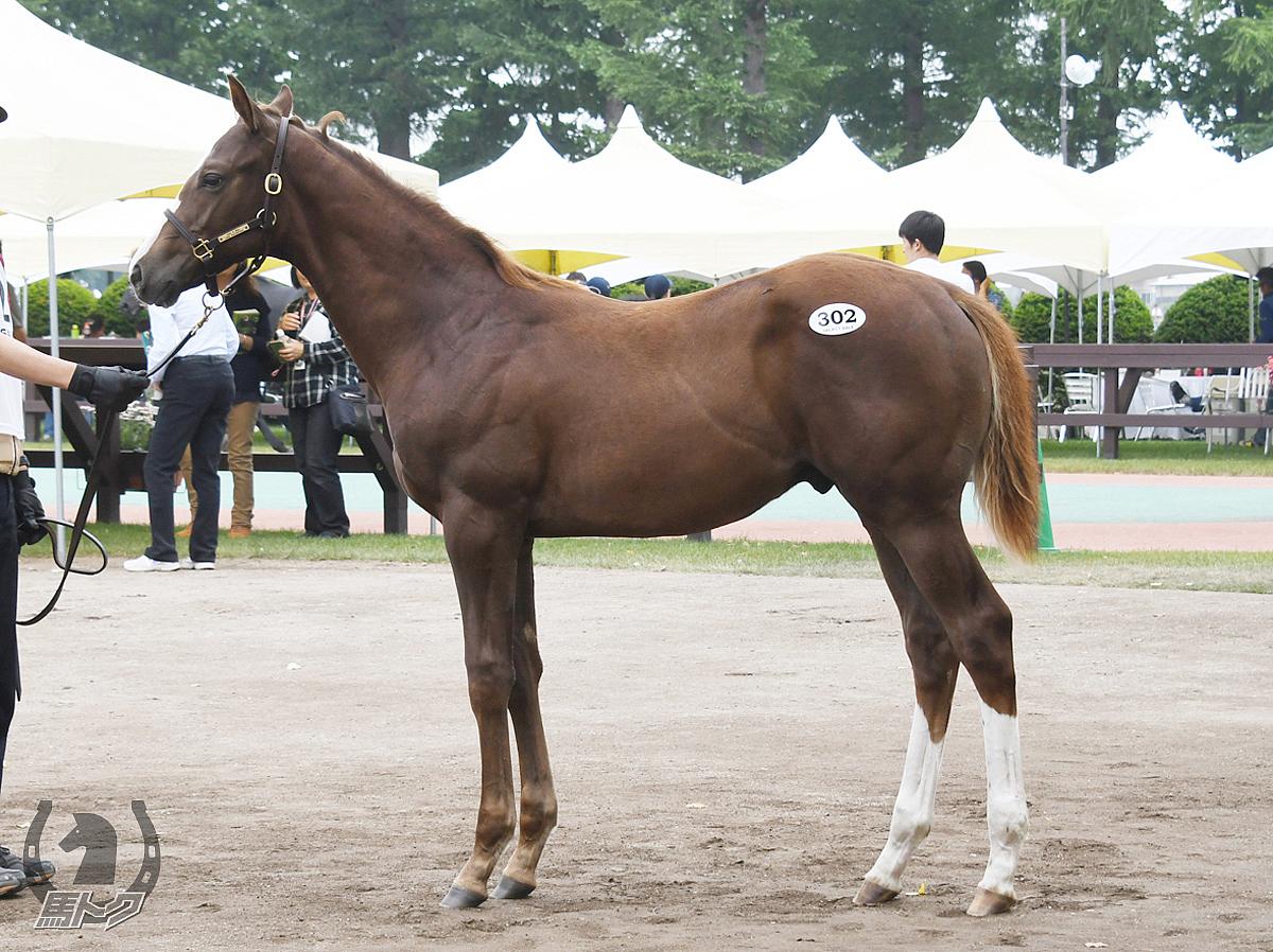 キングスバーンズの馬体写真