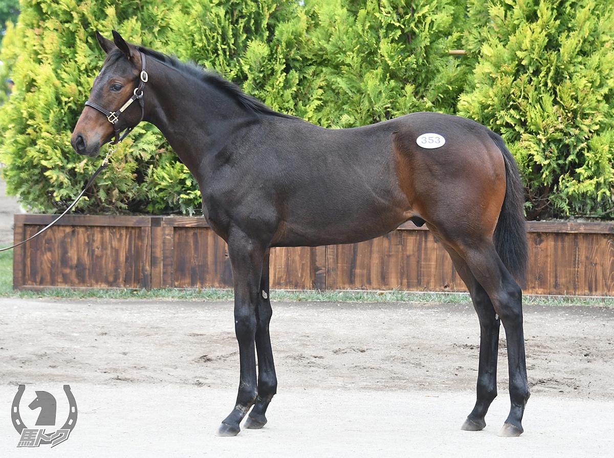 ナリタブレードの馬体写真