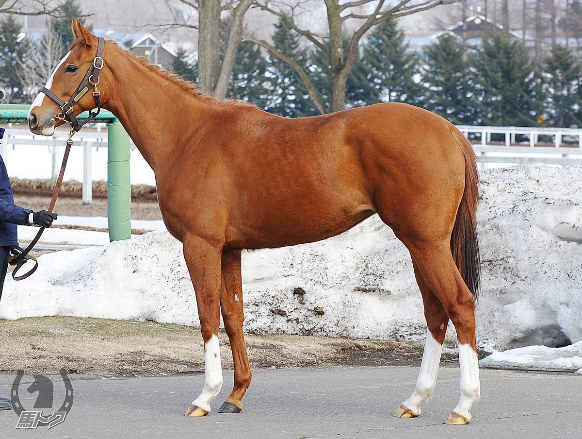グラマラスマリーの馬体写真